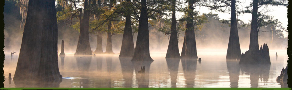 Louisiana Swamp Tours (Crown Point): Top Tips Before You Go ...